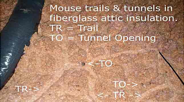 Mouse Exterminating, Trails & Tunnels Marked | Priority Pest Services