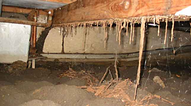 Structural Damage from Termites | Priority Pest Services