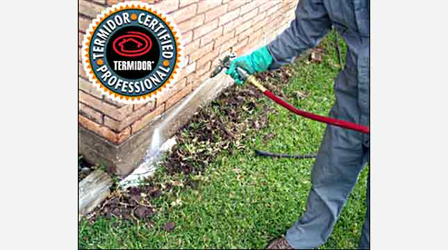 Termidor Termite Treatment | Priority Pest Services