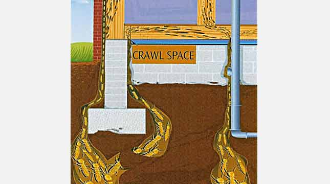 Termite Entry in Crawlspace | Priority Pest Services