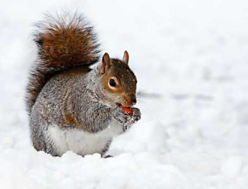 Importance Of Winter Pest Control