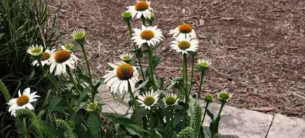 Are There Swarming Termites In Your Flower Beds