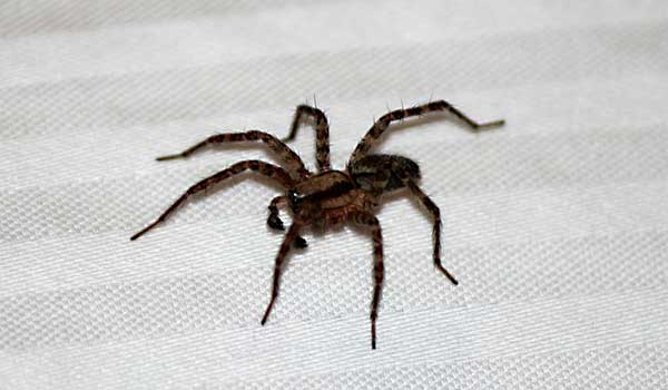 How Do Spiders Keep Getting In Your Home?