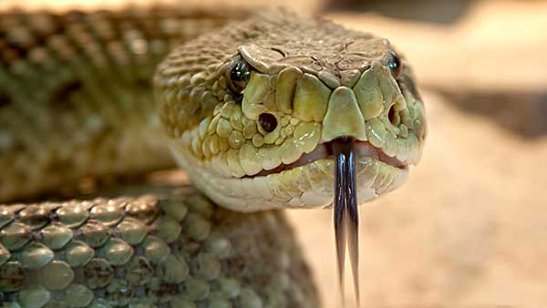 wildlife trapping services snakes