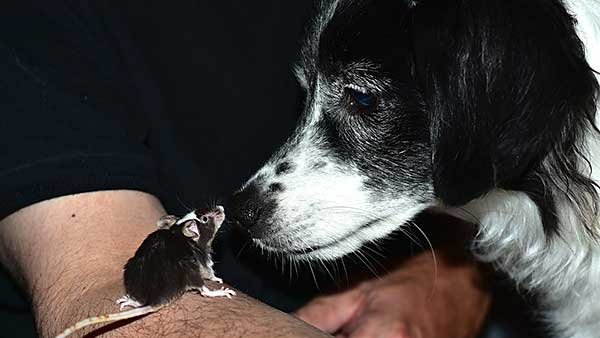 Can Rodents Harm Dogs & Cats? Keeping Rodents Away