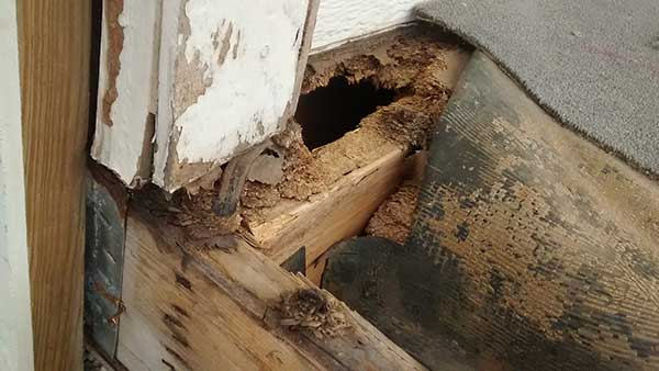 How To Prevent Termites From Moving In