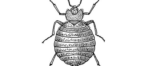 Bed Bugs Archives Priority Pest Services