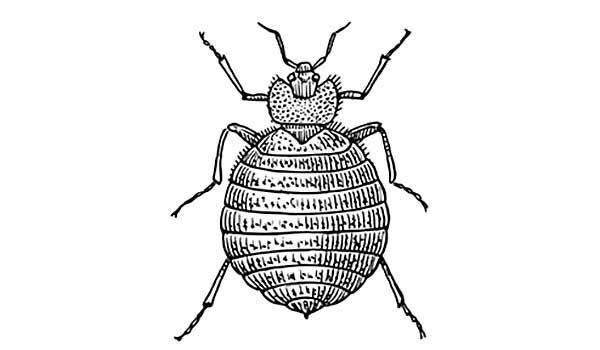 Can You Get Bed Bugs In Your Car Hampton Roads Pest